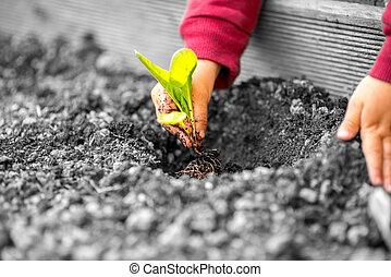 handen, van, een, kind, aanplant, een, kleine, plant