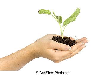 handen, van een vrouw, bewaren, plant