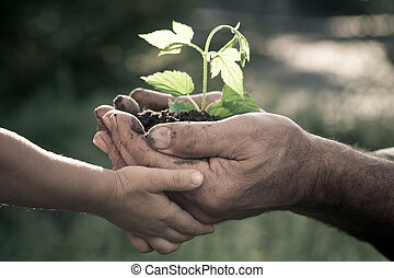 handen, van, oudere man, en, baby, vasthouden, een, plant