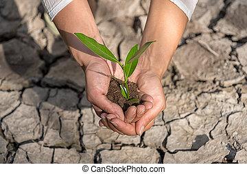 handen, vasthouden, boompje, groeiende, op, gekraakt land