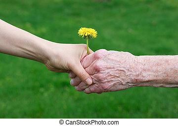 handen, vasthouden, jonge, senior's