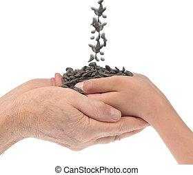 handen, zaden, kleinkind, zonnebloem, grootvader
