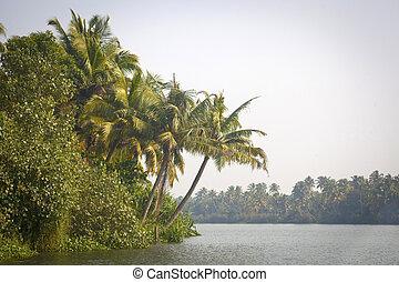 handfläche, backwaters, indien, bäume, kerala