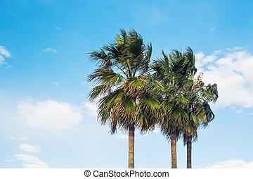 handfläche, himmelsgewölbe, hintergrund, bäume