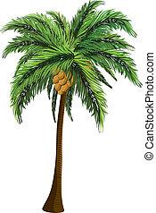 handfläche, kokosnuß- baum