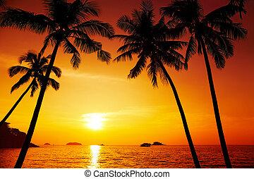 handfläche, silhouette, sonnenuntergang, bäume