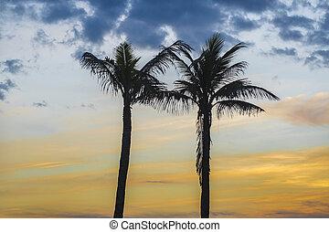 handfläche, sonnenuntergang, bäume, gegen, himmelsgewölbe