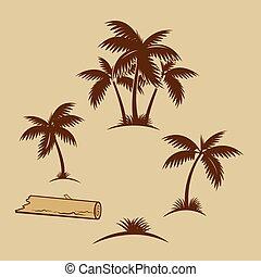 handfläche, tropische