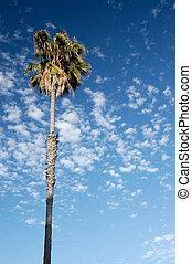 handfläche, wolkenhimmel
