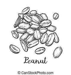 Handful of peanut. Vector illustration of nuts isolated on...