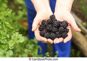 handful of ripe berries bramble close up photo
