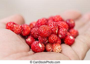 strawberry on a palm