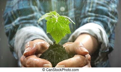 Handful of Soil with Young Plant Growing. Concept and symbol...