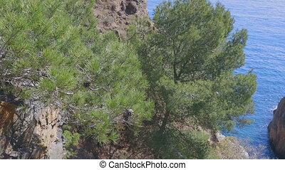 Handheld footage, mediterranean pine trees in the Costa...