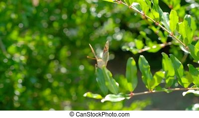 Handheld shot of butterfly going in blur - Handheld shot of...