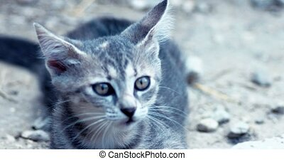 Handheld shot of kitten playing - Handheld shot of tabby...