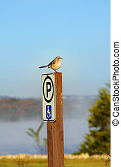 Handicapped are Welcomed by a Mockingbird - Mockingbird is ...