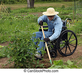 handicapped farmer in a wheelchair weeding a garden
