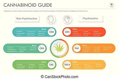 handlowy, infographic, poziomy, przewodnik, cannabinoid