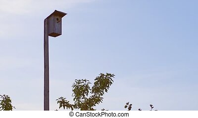 Handmade Birdhouse for Starlings Mounted on Tall Pole in ...