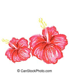 handmade drawing pastel chalks  hibiscus background.