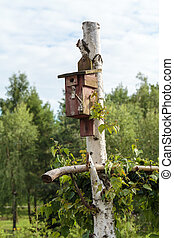 handmade house for birds in garden