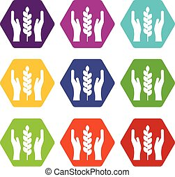 Hands and ear of wheat icon set color hexahedron