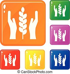 Hands and ear of wheat icons set vector color