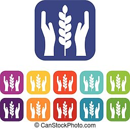 Hands and ear of wheat icons set