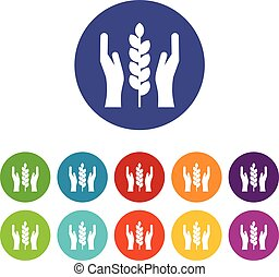 Hands and ear of wheat set icons