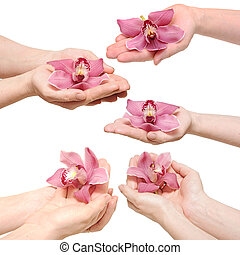 Hands and orchid over isolated white background. each one is a separate picture