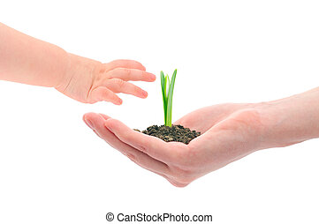 Hands and sprout - Concept image of a older hand handing...