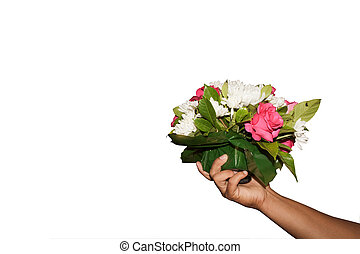 Hands are holding a flower on white background