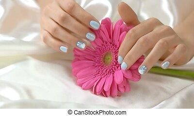 Hands caress gerbera, slow motion. Well-groomed hands of...