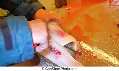 Hands cut fresh cod fish, remove and check livers. Hands...