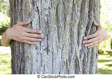 hands embracing and protecting the tree