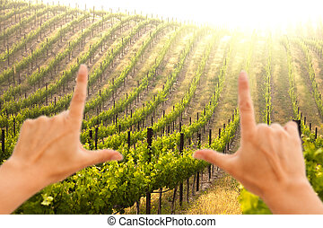 Hands Framing Beautiful Lush Grape Vineyard