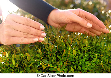 hands gently touch green plant. Protect the environment concept. world nature day