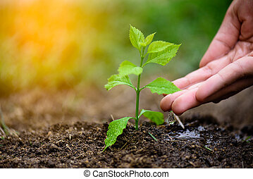 Hands giving water to a young tree for planting. Earth Day concept.