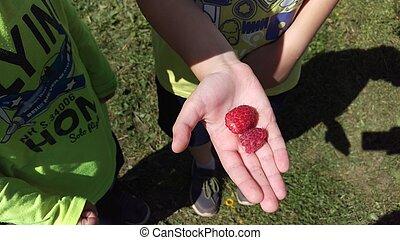 hands., haut fin, beau, framboises, enfants, macro., s