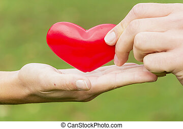hands hold heart - the hands of a loving couple are holding...