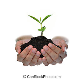 Hands holding a green young plant isolated on white background