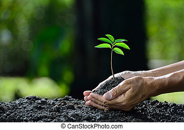 Hands holding a green young plant