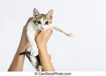 Hands holding a kitten on white background
