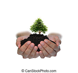 Hands holding a small tree isolated on white background