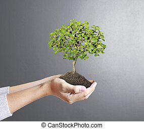 hands holding a tree