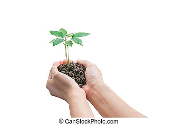 Hands holding a young plant, Isolated on white background, ...