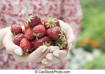 Hands holding fresh strawberries - Closeup of female hands ...