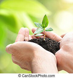 Hands holding green seedling with soil - Hands holding green...