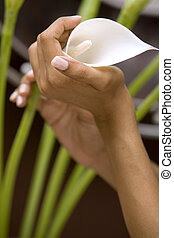 hands holding lilie - woman\\\'s hands holding white flower...